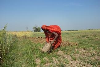 A Nepalese lady working in a field